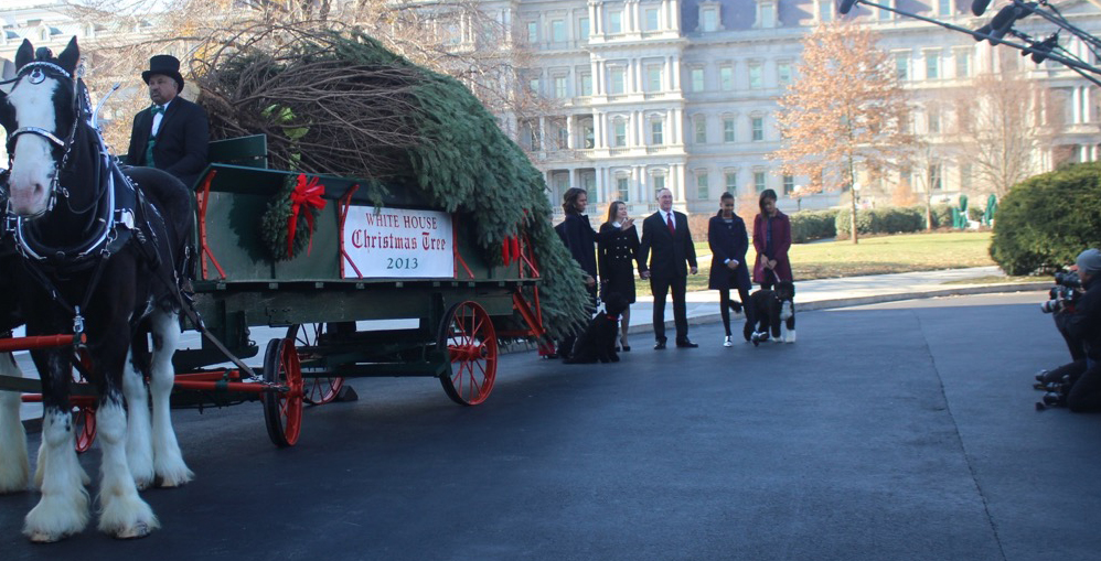 Christmas trees arrives at Whitehouse